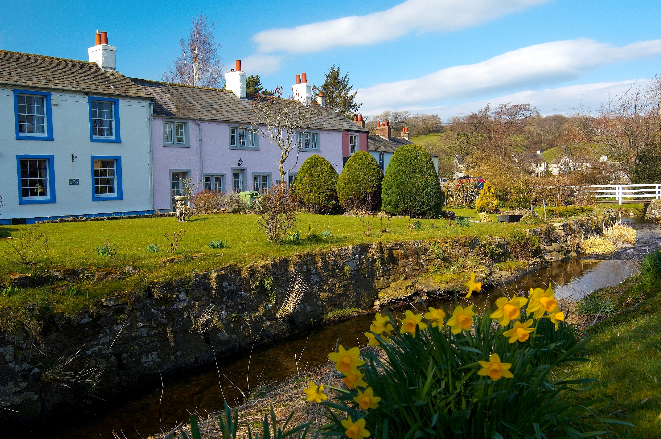 Caldbeck showing spring daffodils by the beck-©Brian-Sherwen-www.golakes.co_.uk_..