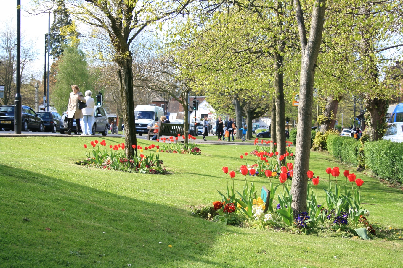 Lower High Street Harpenden showing trees coming into leaf in spring with red tulips and spring flowers on the ground © Harpenden Town Council