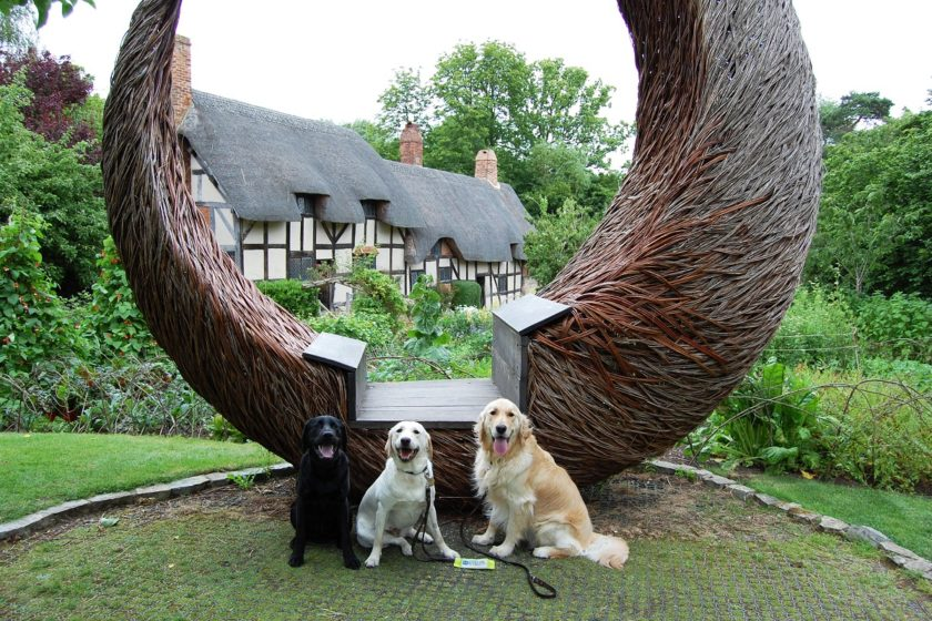 Shakes-paws at Anne Hathaways Cottage - three lovely retrievers sitting outside © Shakespeare's England